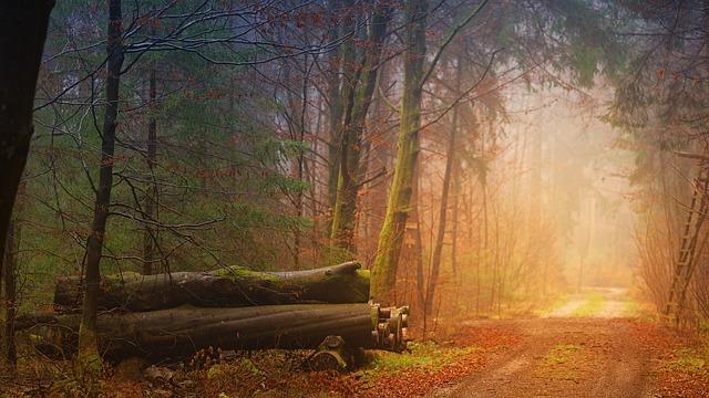 buková kulatina v lese.jpg