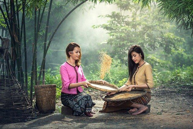 Asiatky třídí rýži